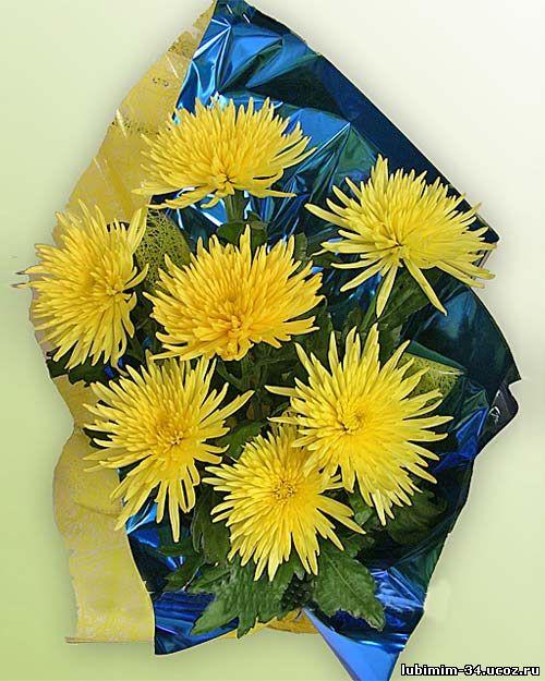 Букет из семи желтых хризантем. Оформление - цветная слюда