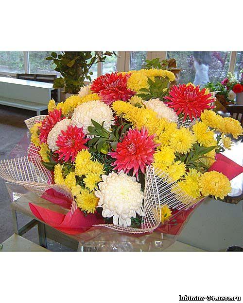 Букет из хризантем смешанных цветов. Оформление - зелень (листья салала), цветочная сетка, фетр, прозрачная слюда