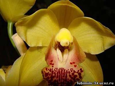 Alive flower to orchids